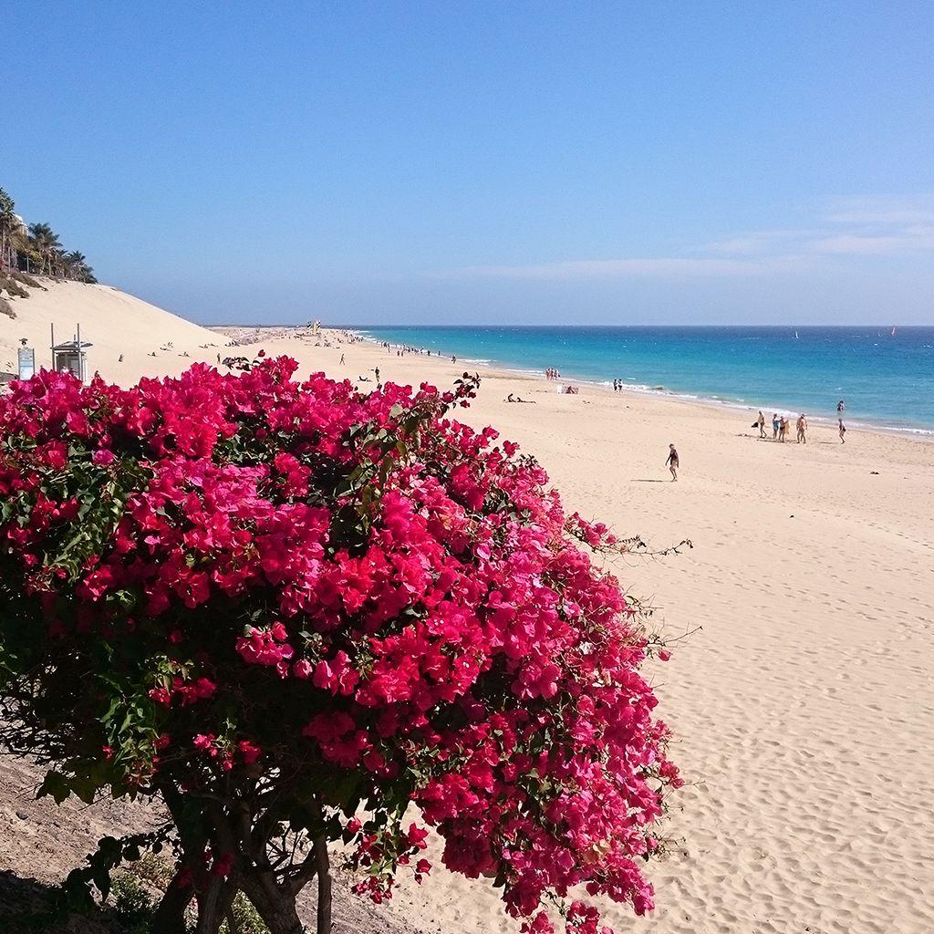 Risco del Paso playas de Sotavento Fuerteventura Una vasta extensi³n de arena blanca besada por el Océano Foto de Home Canarias