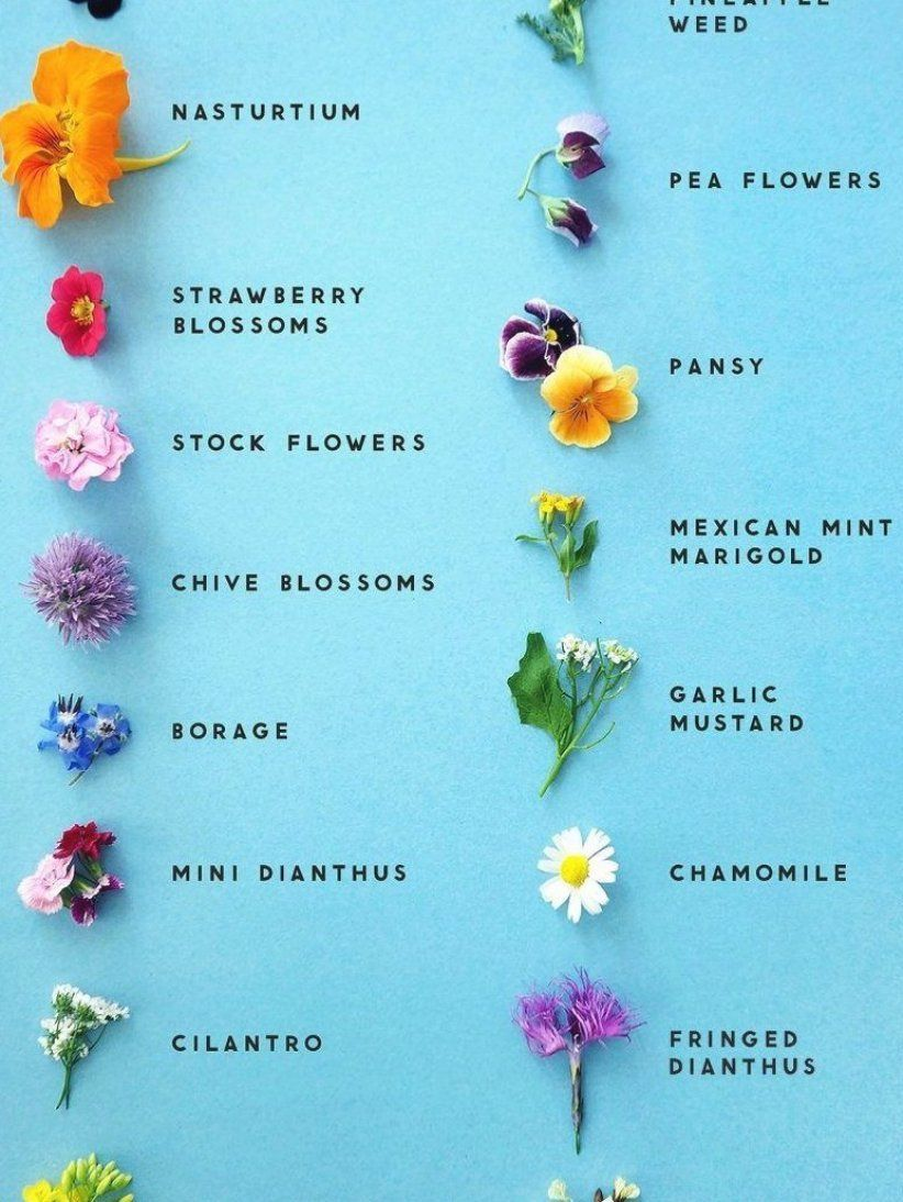 Easily Identify Edible Flowers With The Help Of This Graphic In 2020 Edible Flowers Poisonous Plants Natural Garden