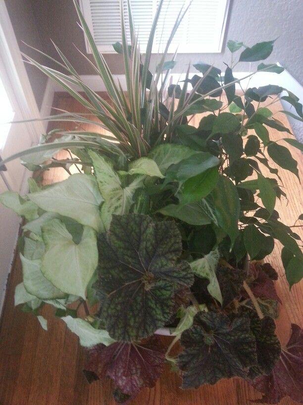 House plant arrangement using discount plants | landscape design and ...