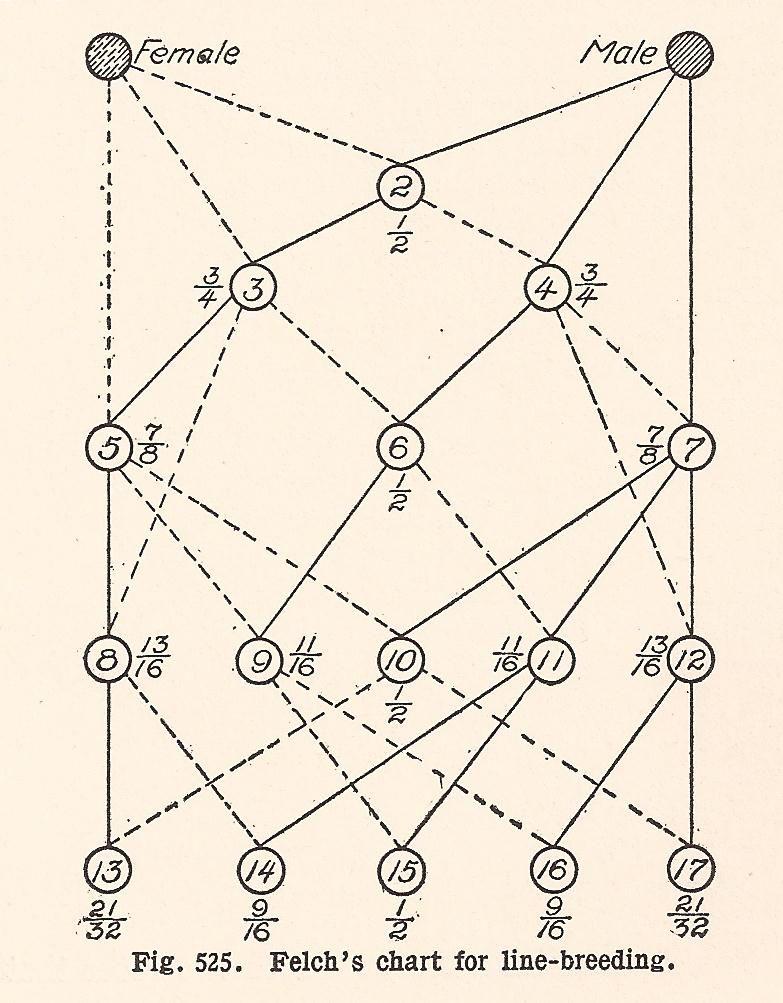 I K Felchs Line Breeding Chart