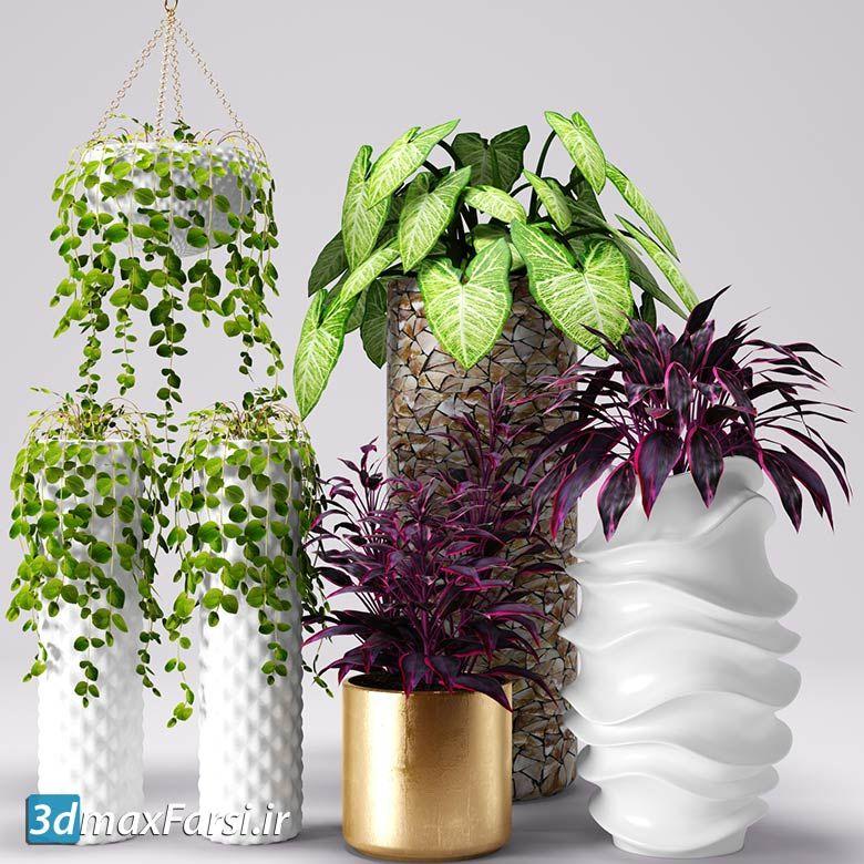 دانلود آبجکت گیاه تزئینی تری دی مکس با کیفیت بالا Download 3DDD