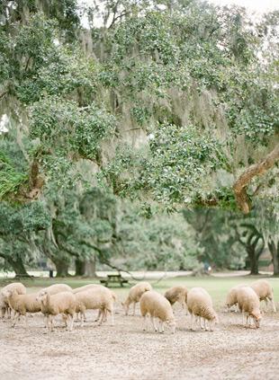 Wedding Editorial in Charleston KT Merry в 2020 г