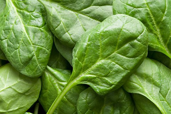 Spinach is chock-full of nutrients, including iron, calcium and vitamin A, which keeps the eyes and skin healthy. Spinach also packs folate, which helps the body form healthy red blood cells and prevents birth defects during pregnancy. In your salads, sandwiches and omelets. Serving size: 1 cup fresh or ½ cup cooked Calories: 7–21