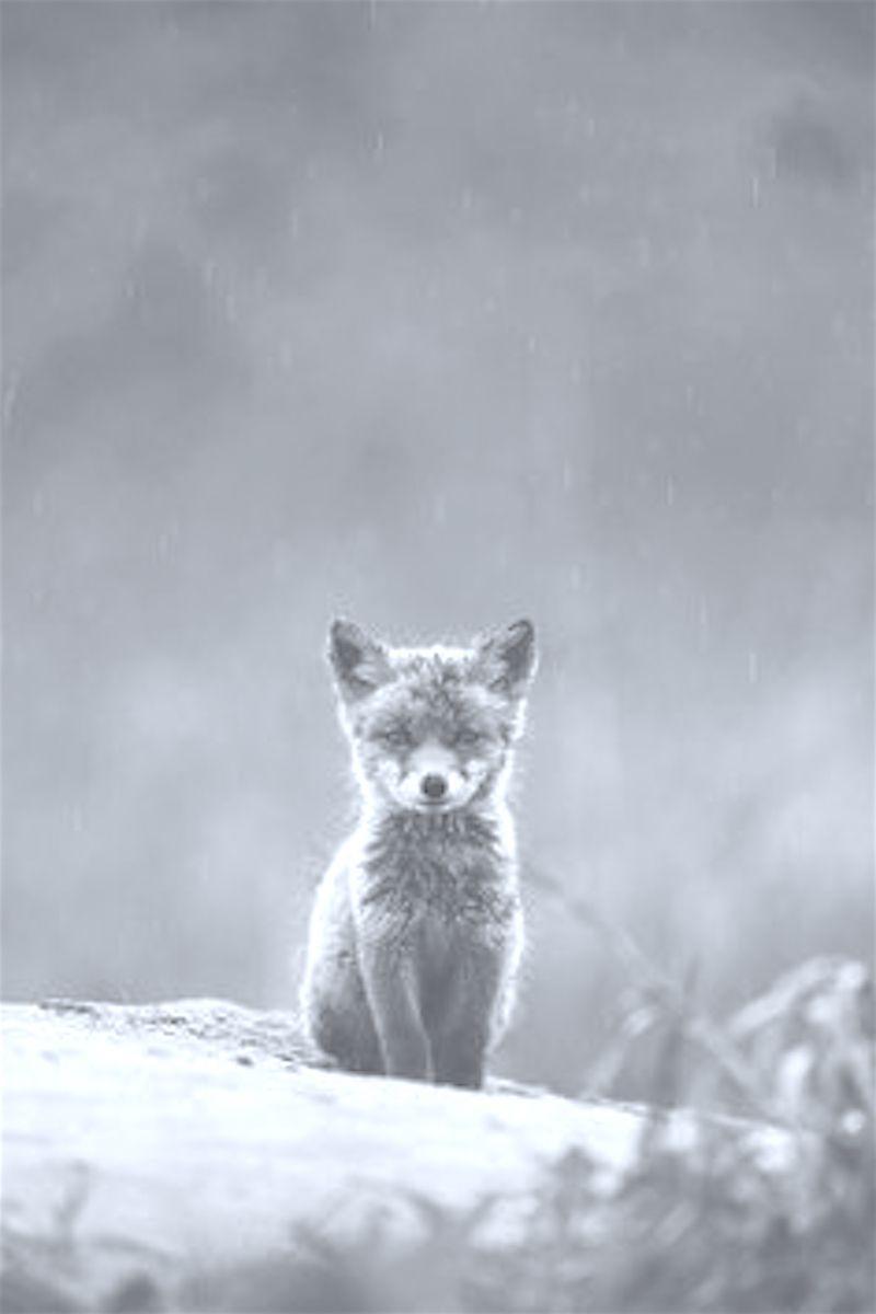 Winter * ️*. Wishes & Dreams .* ️* Cute animals