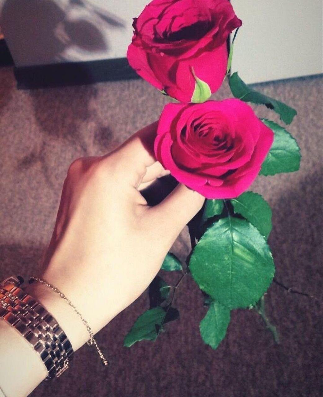 لم ت خلق الأحلام لتك ون مستحيلة Beauty Iphone Wallpaper Aesthetic Roses Rose Tumblr