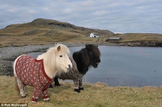 Adorable Ponies In Sweaters
