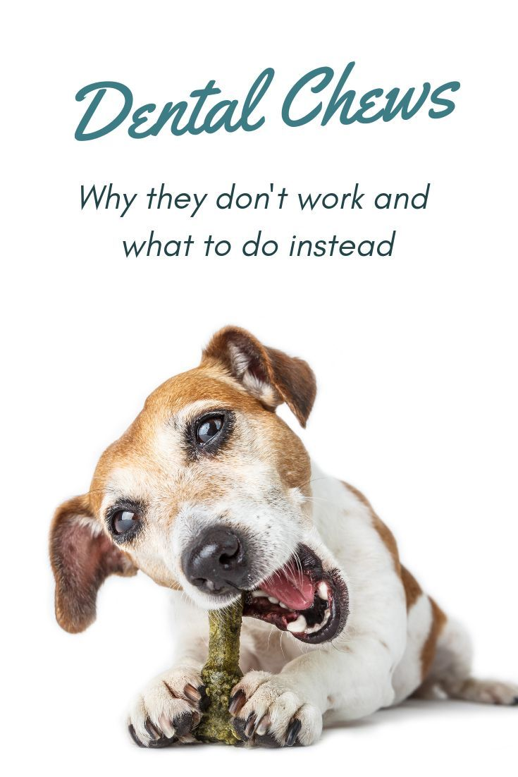 Learn why dental chews made for dogs do not work. The