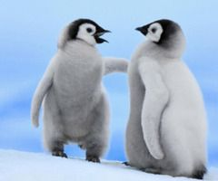 Penguins...i think they are having a convo!