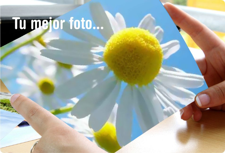 Tu mejor foto de primavera, un cuadro.  Your best spring photo, a canvas