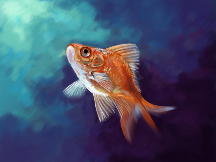 Goldfish By Whitesirin On Deviantart Goldfish Fish Art Art