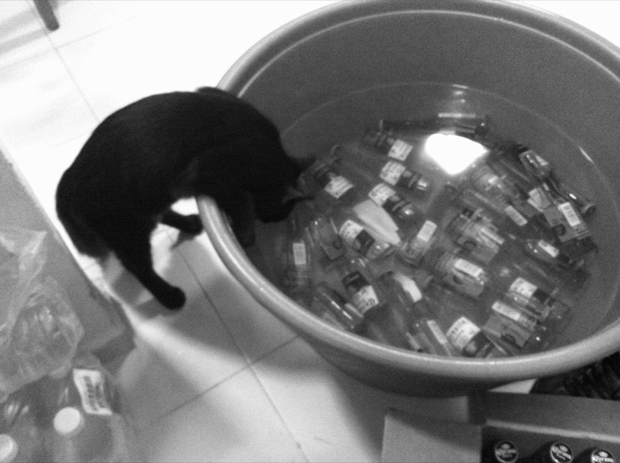 Un gato vicioso.