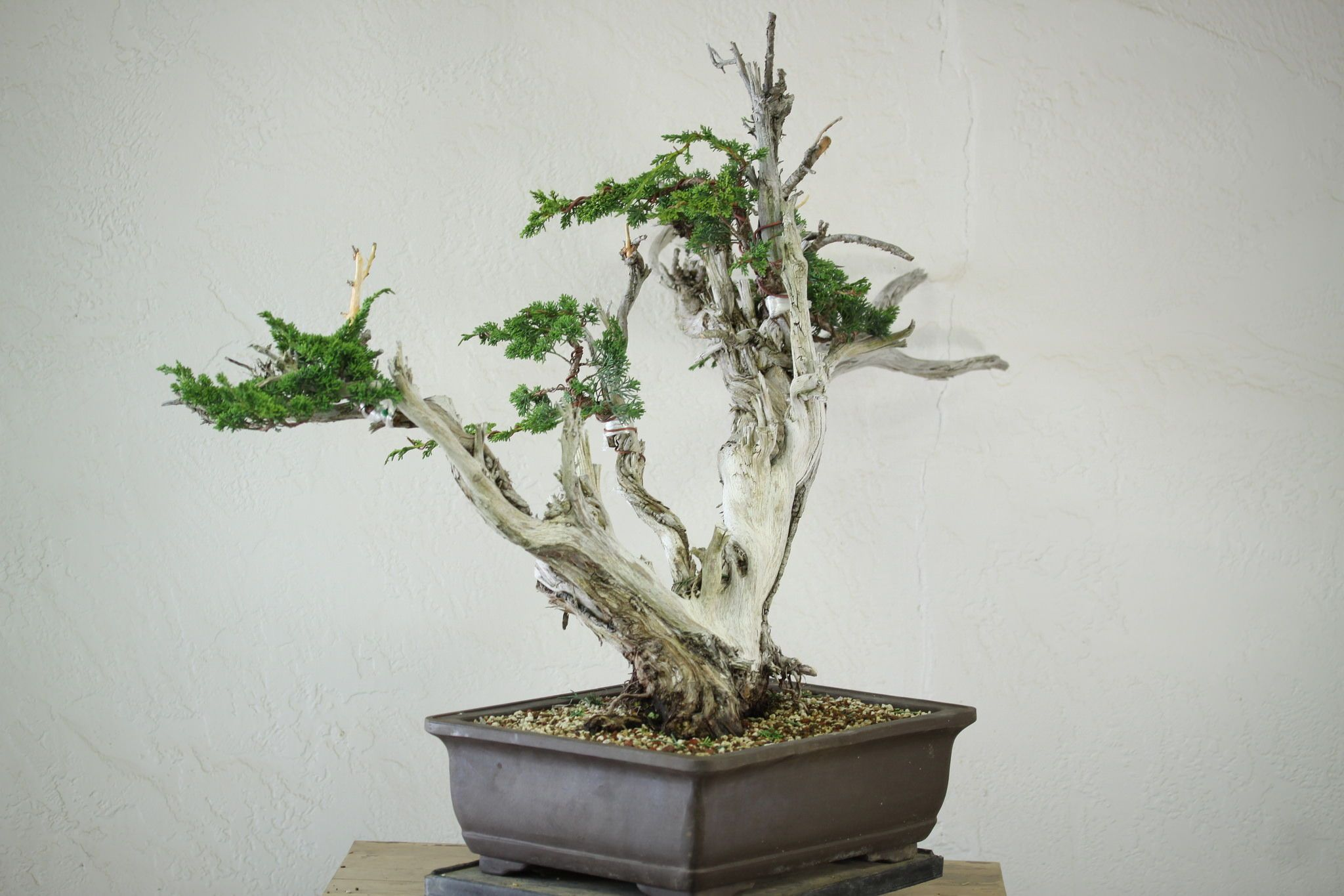 bonsai tree care learn how to grow prune and care for bonsai trees