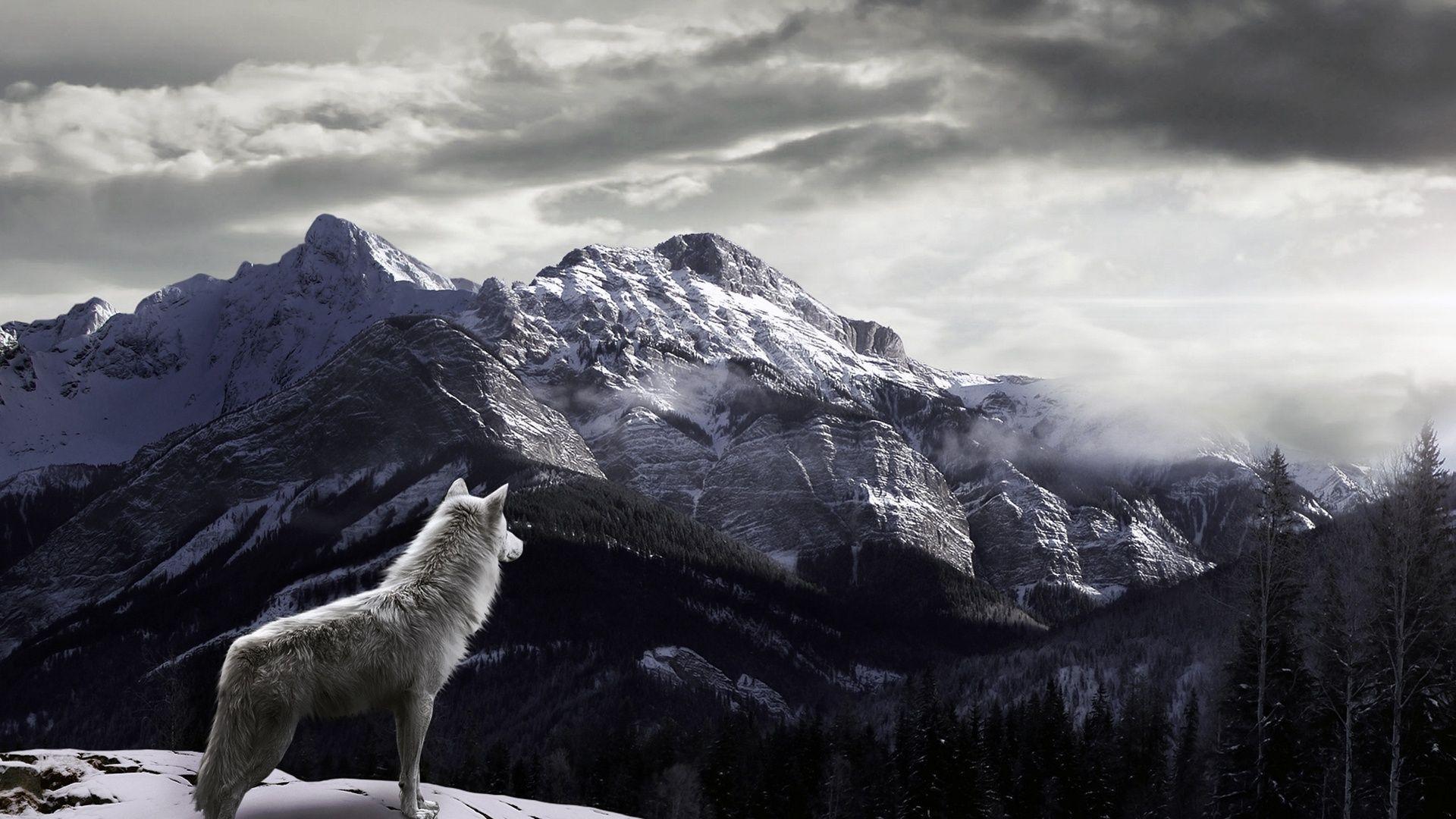 Wolf Wallpapers Desktop Wallpaper 1920x1200 40
