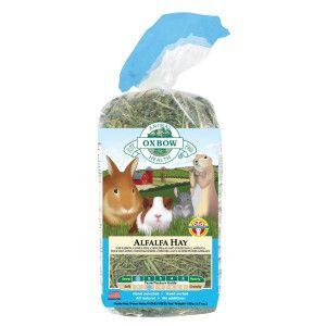 Oxbow Alfalfa Hay Alfalfa Hay Small Pets Food Animals
