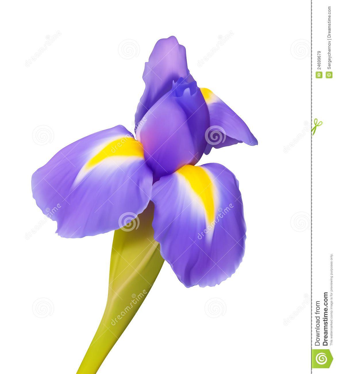 Iris Flower Drawing Iris Flower Tattoo Flower Drawing Iris Flowers