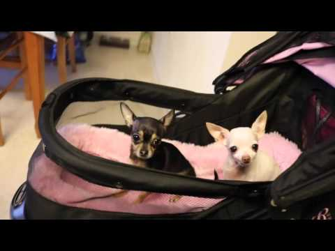 "(25) Our ""Pet Gear"" Stroller ! Mini review and Overlook"