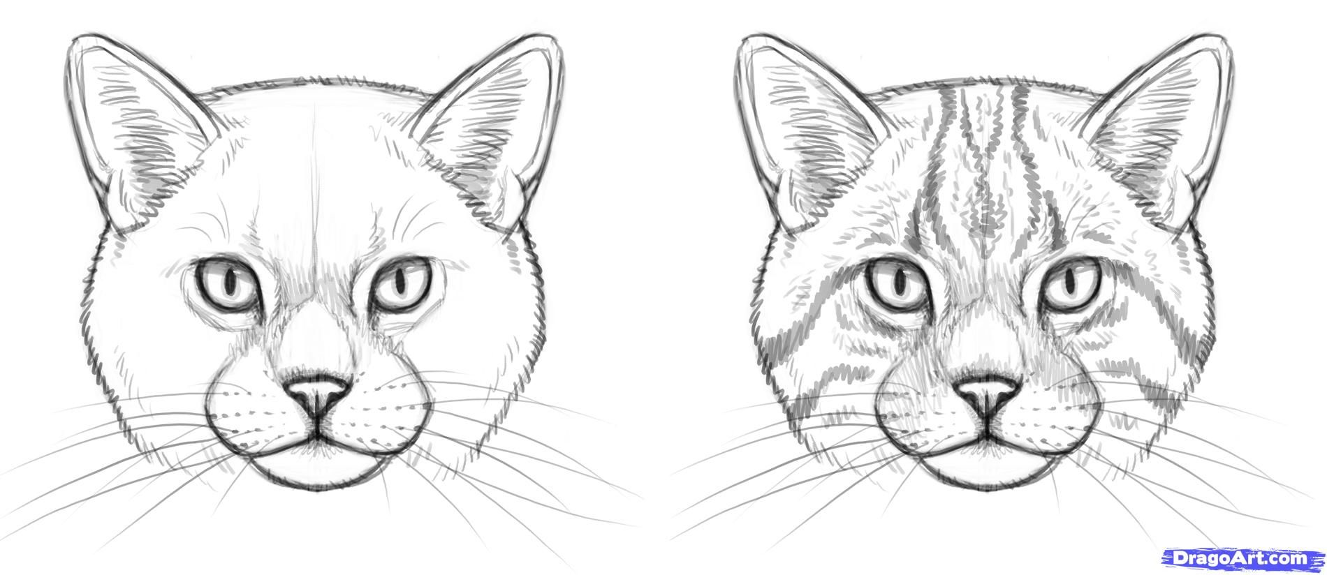 How To Draw Wild Cats By Makangeni With Images Cat Face