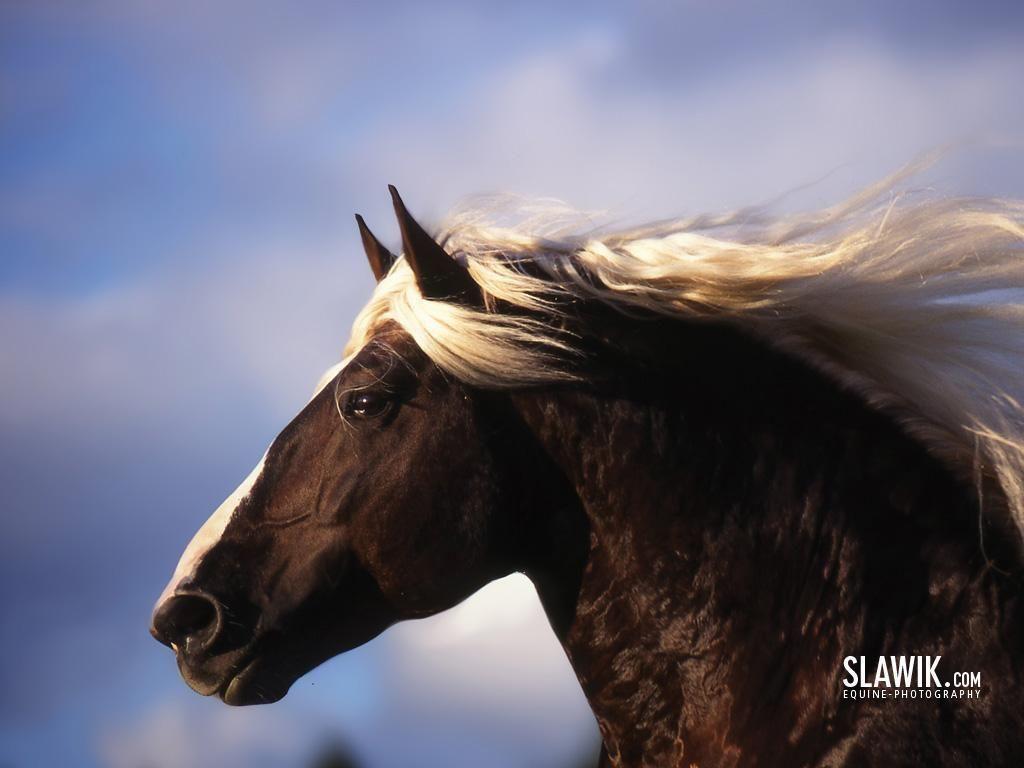 Beautiful Horses Wallpaper Horse Wallpaper Arabian Horse