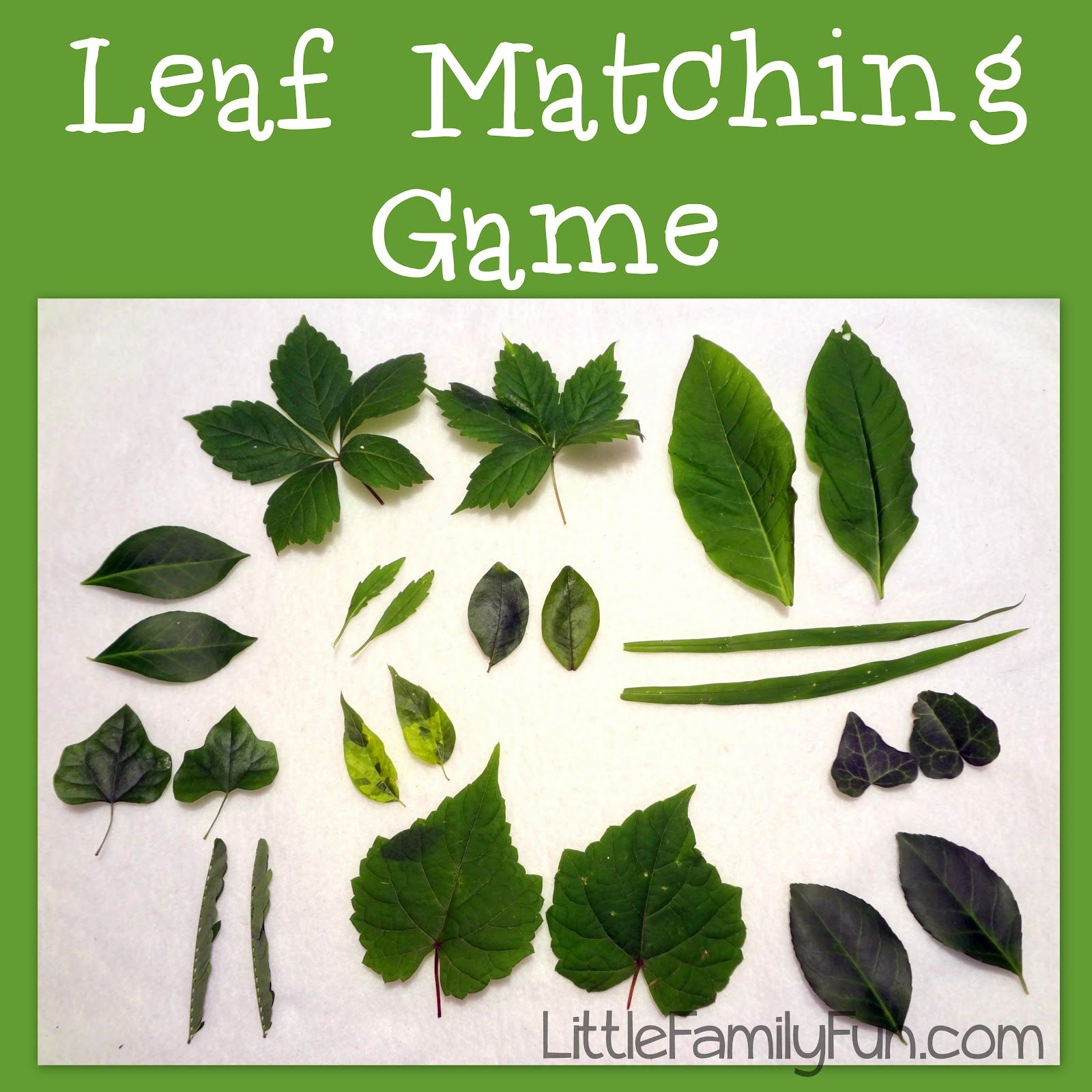 Leaf Matching Game Could Also Make It A Leaf Scavenger Hunt