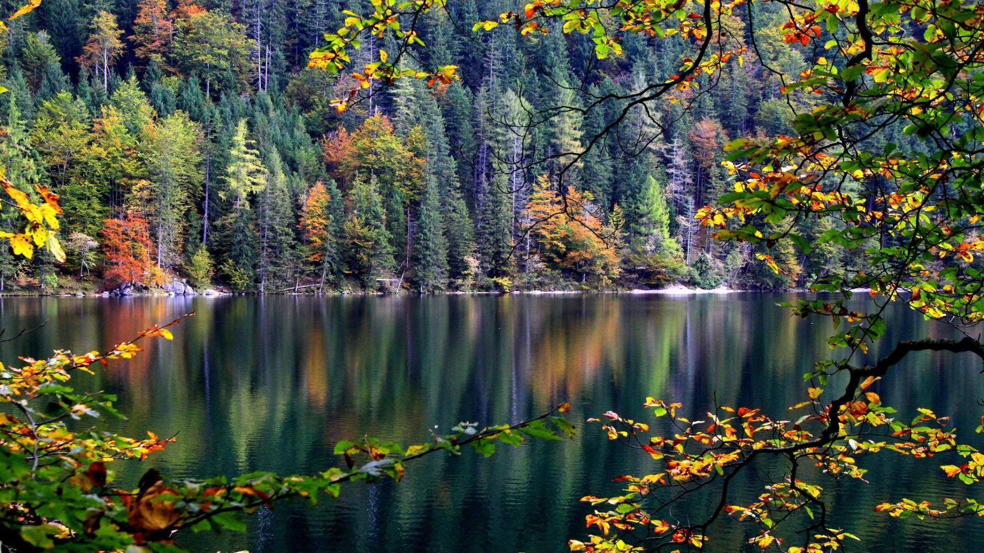 wpnature com color forest autumn lake sklon les derevya reka osen wallpaper desktop backgrounds