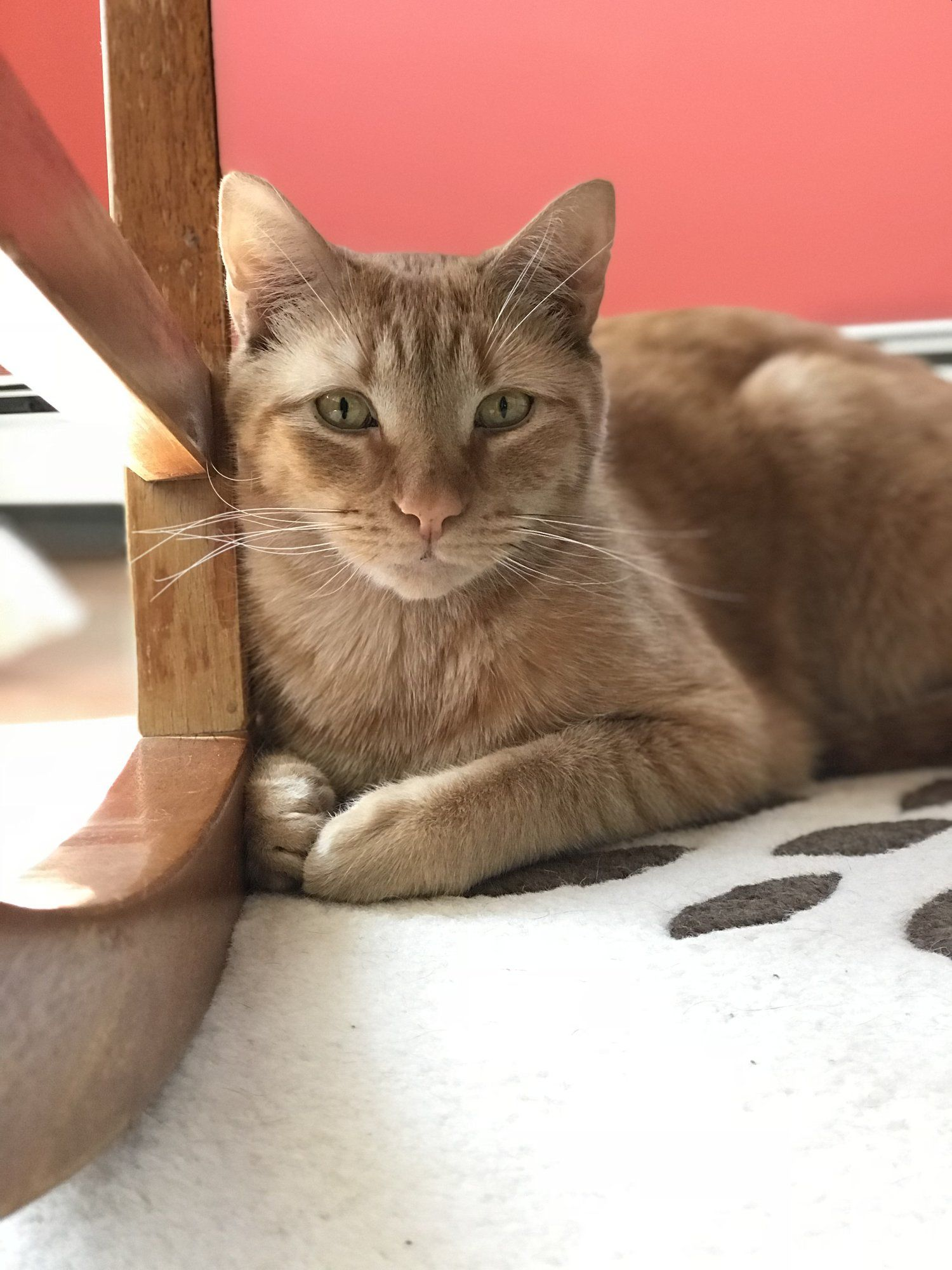 Handsome Sammy Joined Our Family In February 2018 Yes I M A Crazy Cat Lady Find Out More About My By Clicking Through To My Crazy Cats Cats Cats Kittens