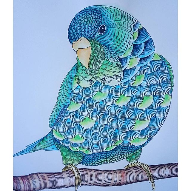 Coloring Ideas Budgie