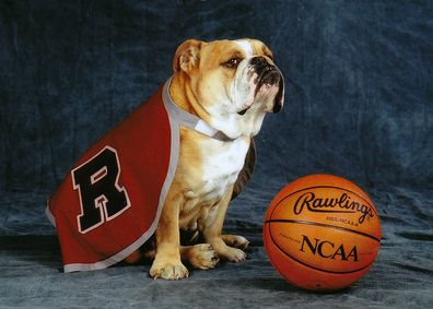 The Third Official Mascot Of The University Of Redlands Newton