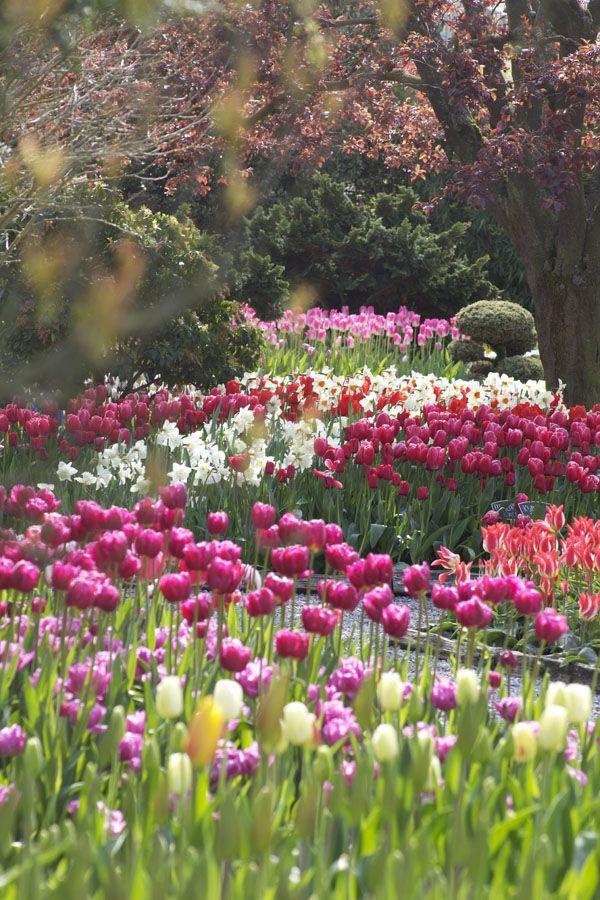 Tulip Festival, Skagit Valley, Washington \u2022Beautiful Places and