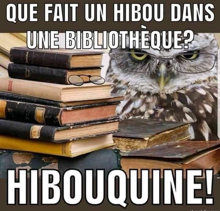 Que Fait Un Hibou Citation Noel Drole Blague Images Droles Humour