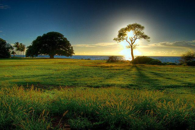 Tree Of Light Beautiful Nature Beautiful Nature Wallpaper Scenery Breathtaking nature hd wallpaper