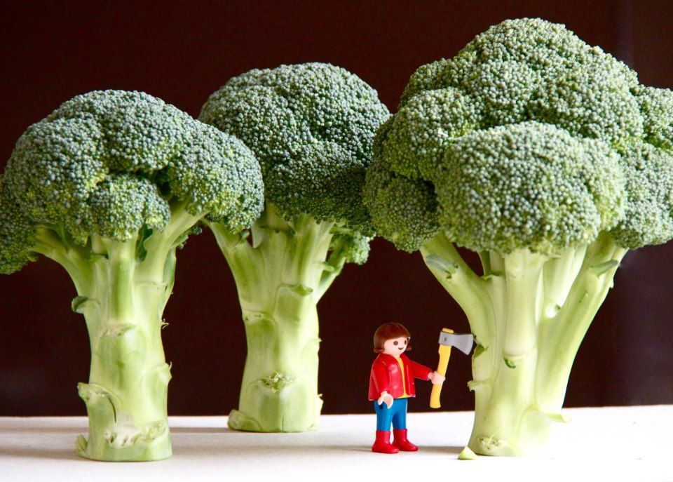 Choppin broccolayyyy