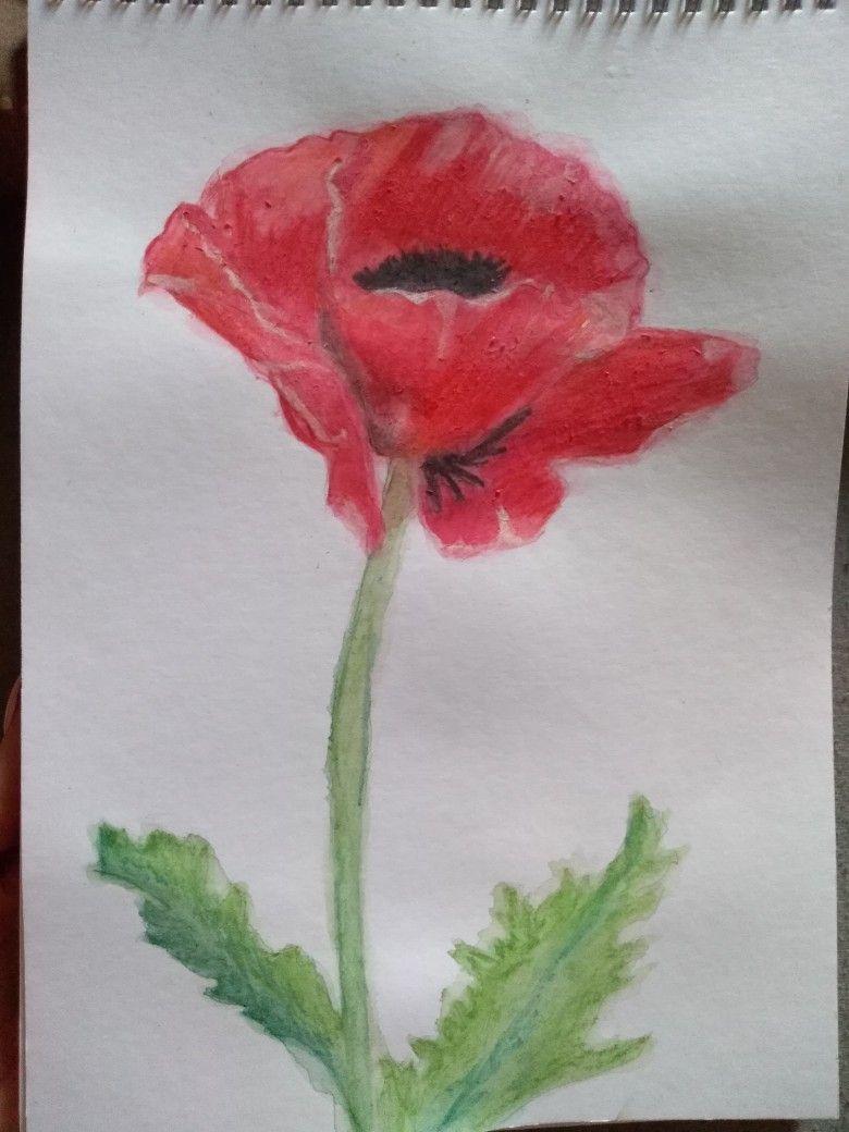 Vlci Mak Kresba Akvarelem Mine Pinterest Leaf Tattoos