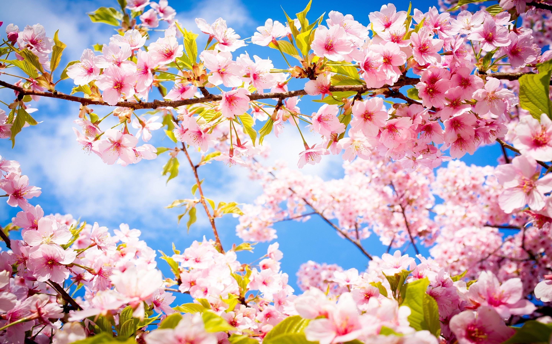 Happy 1st Day Of Spring Woohoo Beenwaitingallwinterforyou Fondos De Pantalla De Primavera Fotos De Portada De Facebook Mejores Wallpapers