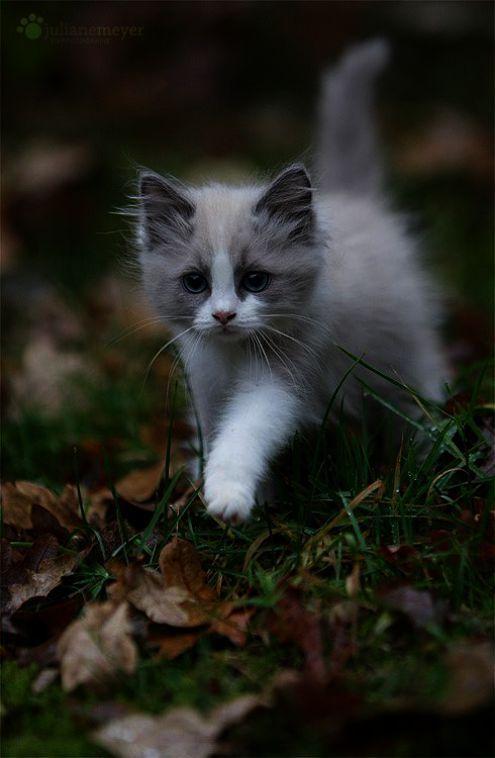Cute Funny Kitten Wallpaper Hd Kittens Cutest Pretty Cats Beautiful Cats