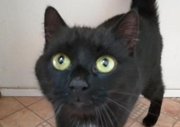 Rspca East Norfolk Hope To Rehome Abandoned Cat With Friendly Nature Cats And Kittens Cats Cat Rescue