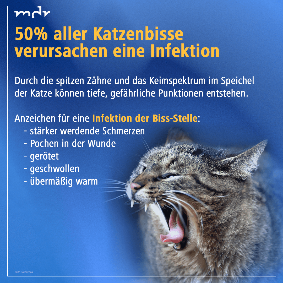 Vorsicht Katzenbiss Katzen Tiere Gesundheit