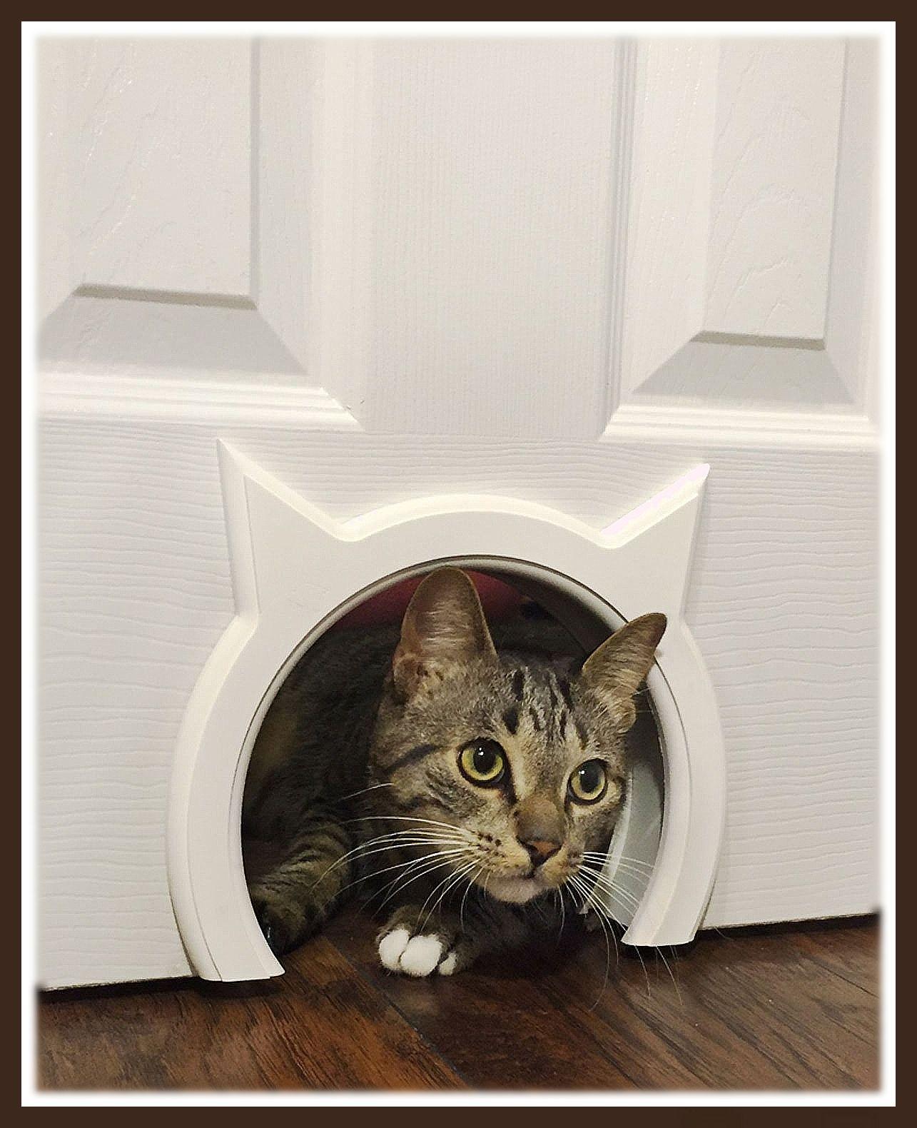 Kitty Pass Interior Hidden Litter In 2021 Cat Door Hidden Litter Boxes Litter Box