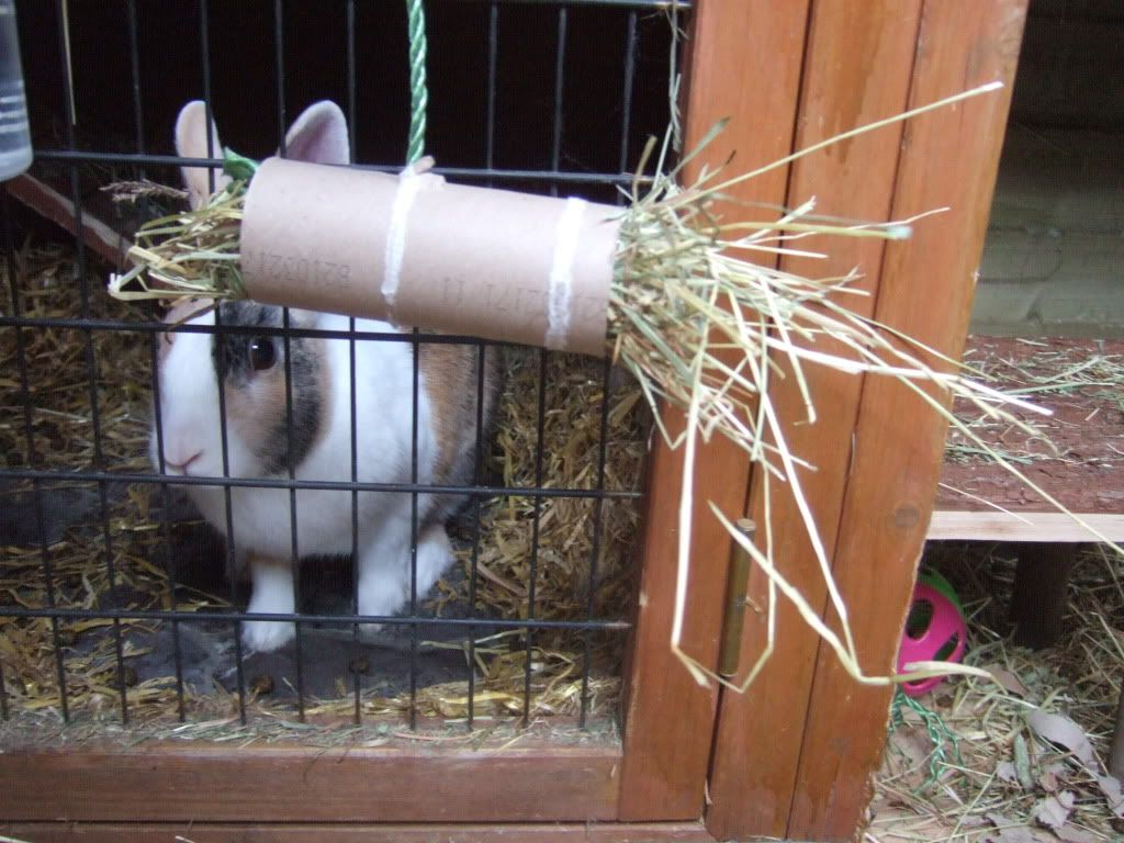 Cardboard roll rabbit hay toy rabbit hay rabbit toys