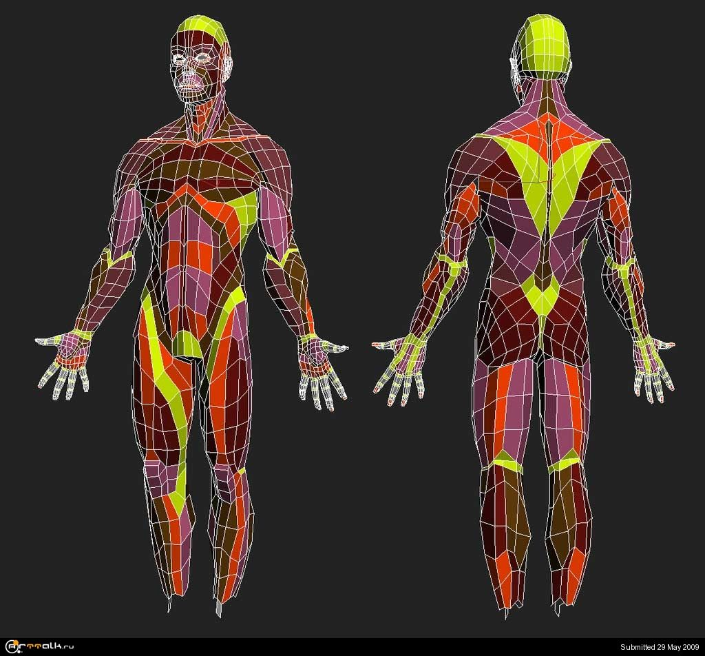 A sample of topological layout for the human body. | Digital ...