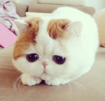 I love this cat. Too cute.