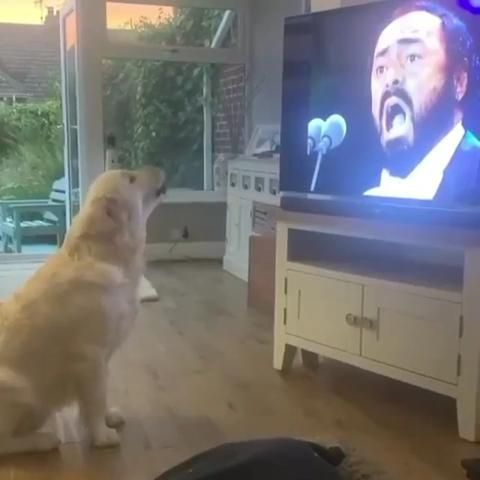 Dog's reaction when he hears his favourite artist