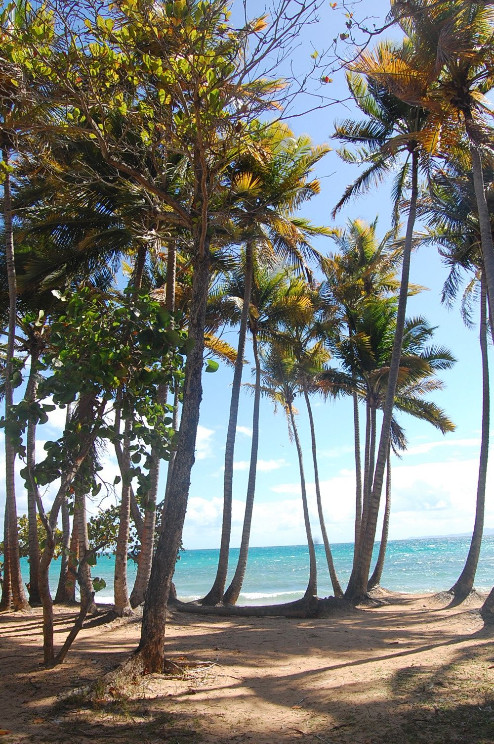 Humacao, Puerto Rico We ate at a place across from a