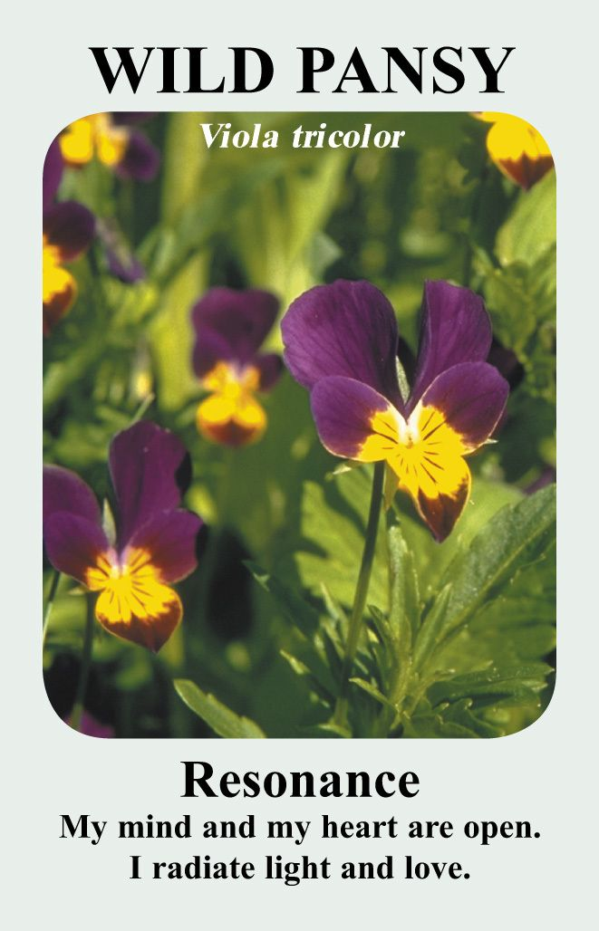 And Remedies From The Flowers Of Scotland Flower Essences Pansies Flowers Pansies