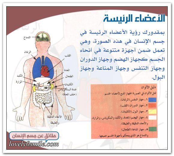المكونات الرئيسية لجسم الإنسان Baseball Cards Cards Arabic