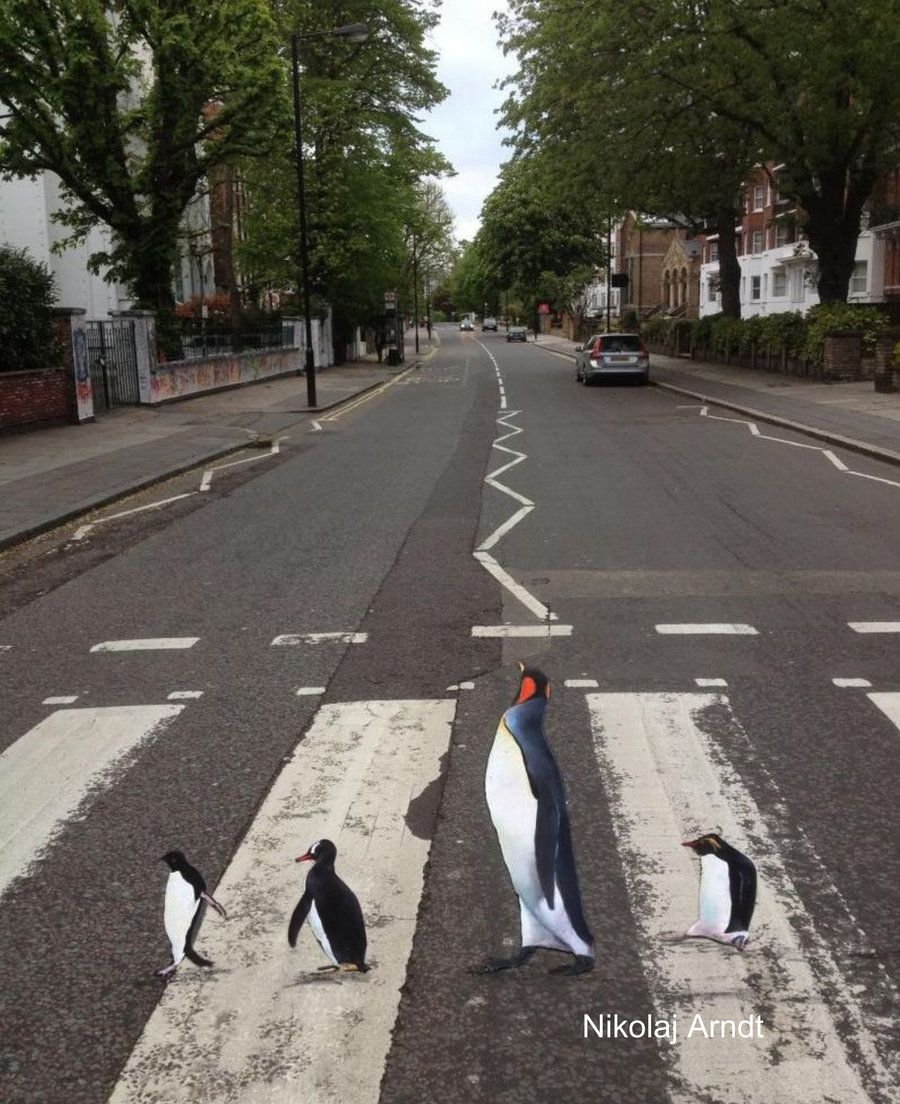 Penguins are rushing to the zoo ... by Nikolaj-Arndt.deviantart.com on @deviantART