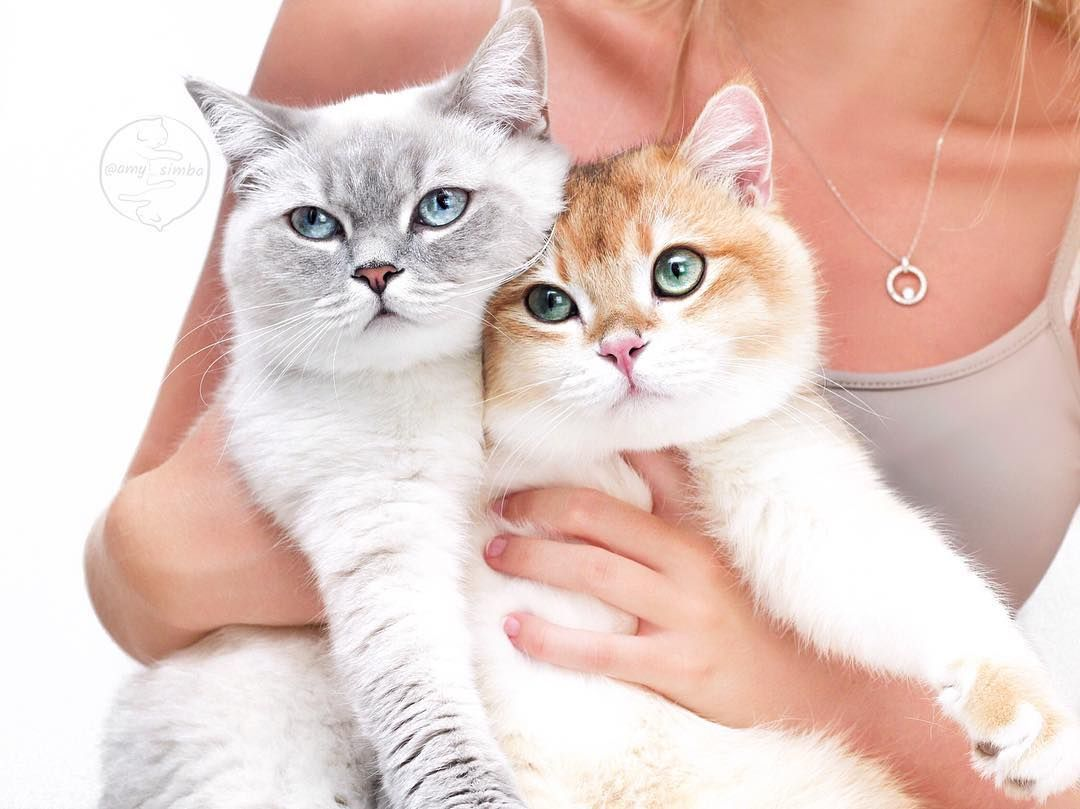 Jouet Pour Chat In 2020 Crazy Cats Cute Cats Cat Girl