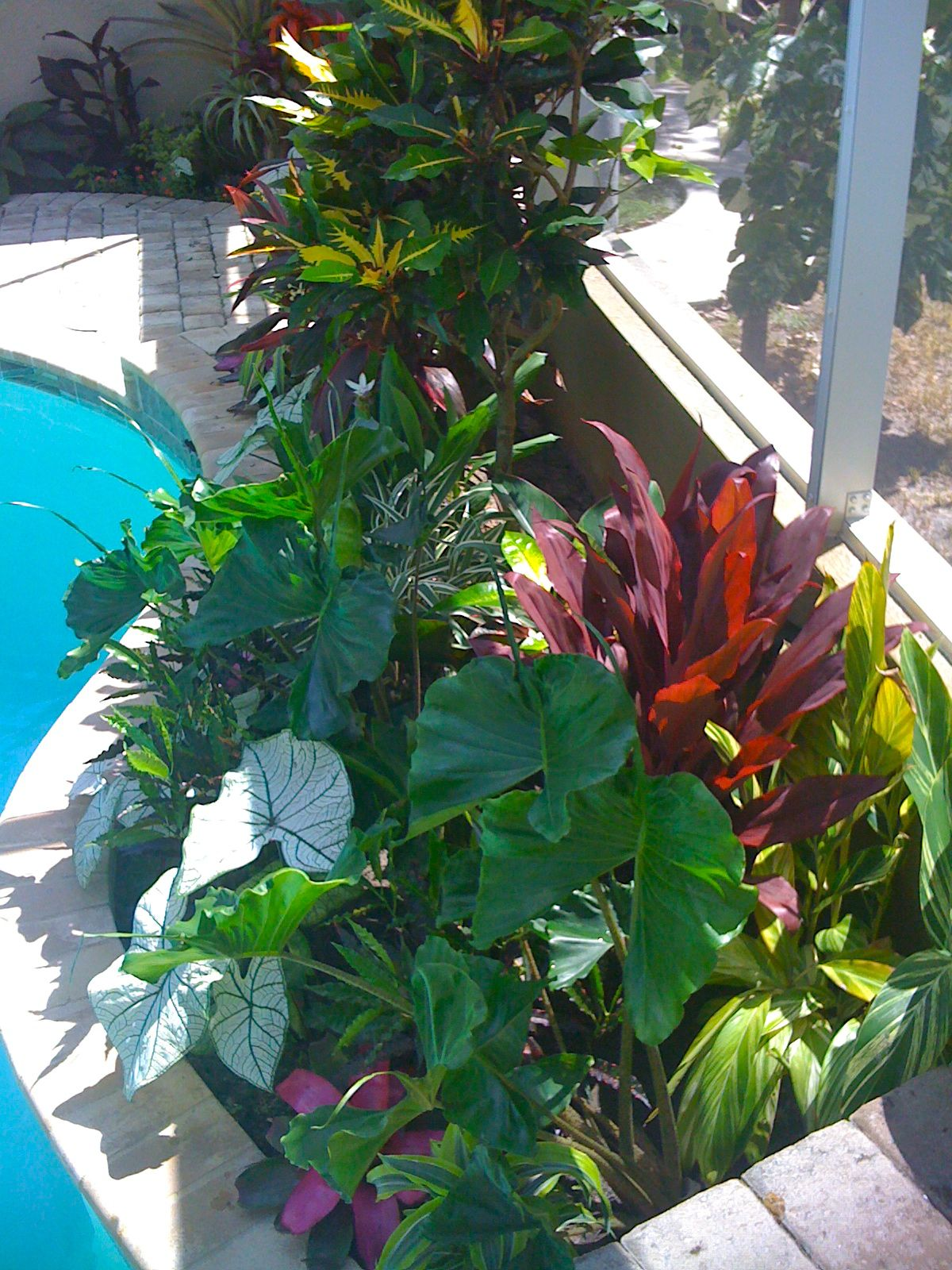 Tropical Poolside Landscape Plantings Tropical Backyard Tropical Landscaping Tropical