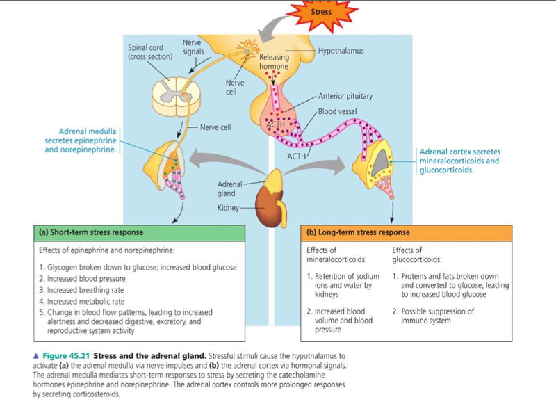 Adrenal Hormones Pathway Google Search Auto Immune Stuff
