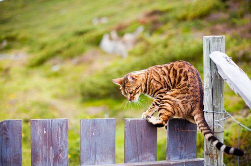 Should I jump or not? #cats