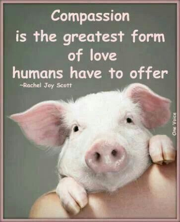 Quote About Compassion With A Pig Make A Statement